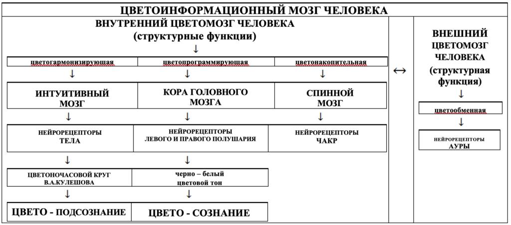 ЦВЕТОИНФОРМАЦИОННЫЙ МОЗГ ЧЕЛОВЕКА